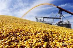 邊談邊打? 陸續對美乾玉米酒糟徵雙反關稅