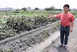 樂活農園作物含鉛超標 禁採賣食用