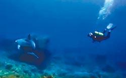 綠島喜遇海豚共游 潛水客嗨翻