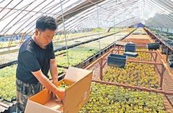 旺報社評》陸鄉村振興 可借鏡台灣經驗