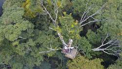 聖稜樹冠生態解密  歷時2年影像全紀錄