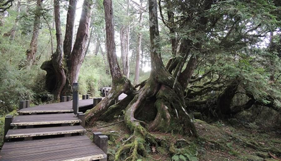 (台灣森林資源豐富,全島都有林區與親山步道。圖片來源:pixabay)