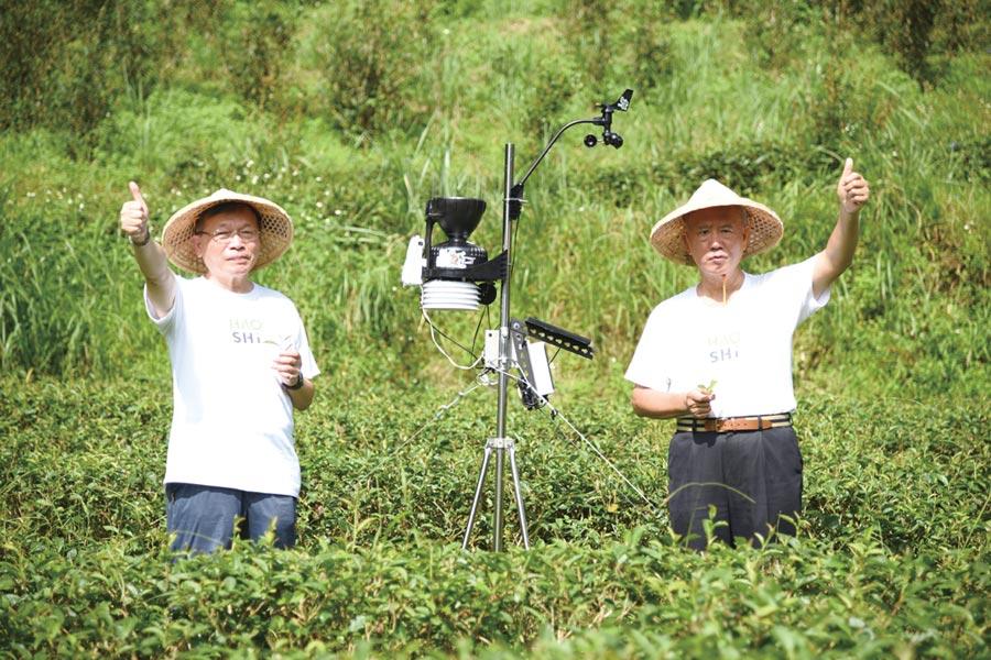 好食好事基金會將科技導入茶園種植管理,以AIoT幫助農民在田間進行即時種植決策與判斷。圖/業者提供