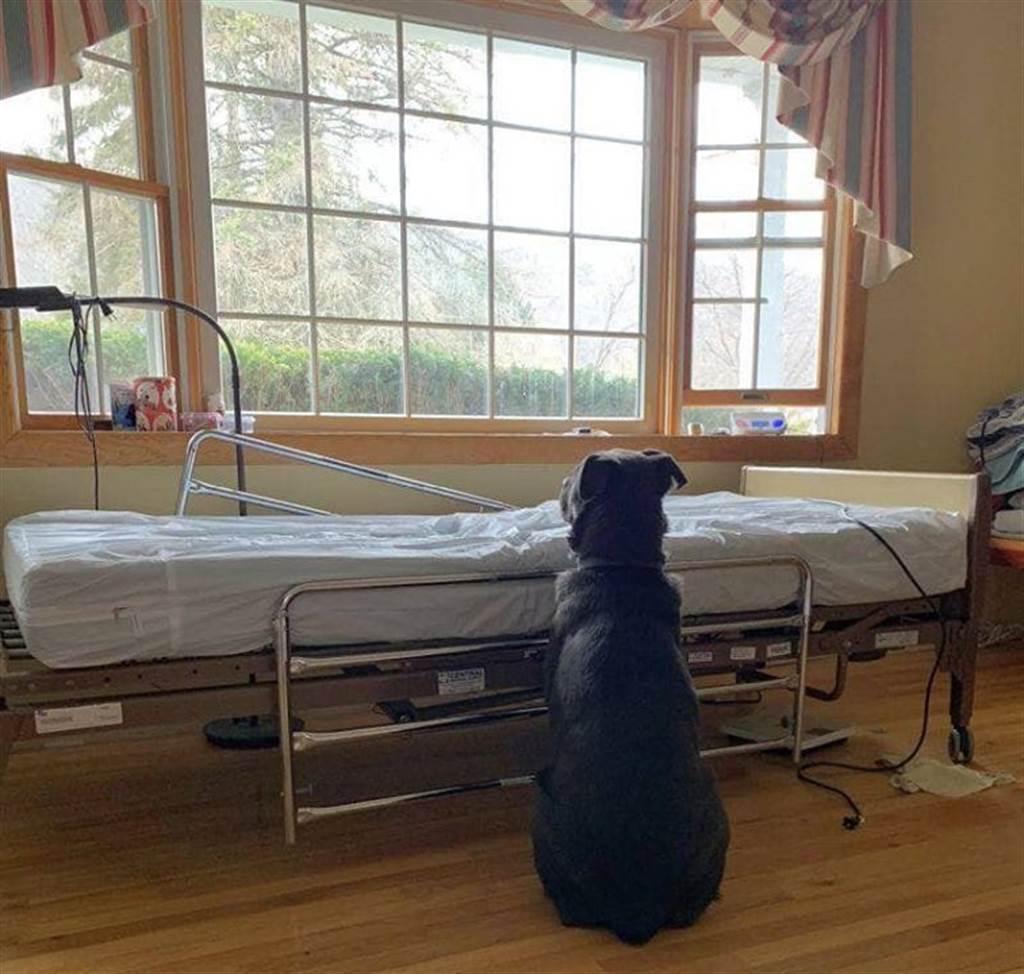 混血拉不拉多犬不知主人已去世,仍坐在病床旁等候主人帶回家,照片引起眾多網友心疼。(圖/翻攝自NorthStar Pet Rescue)臉書)