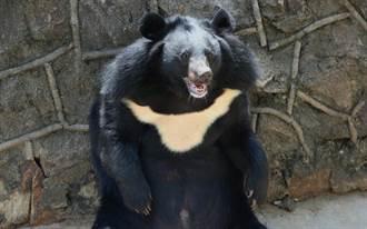 阿嬤曝養過大兇狗 一看是台灣黑熊