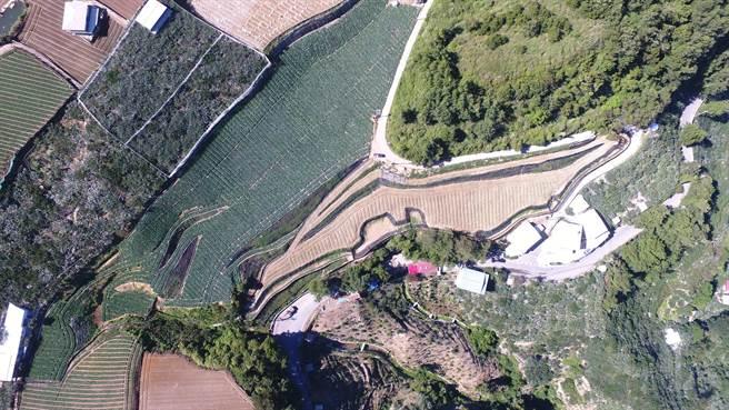 台中市和平梨山地區環山段土地遭濫墾,違規面積近1.5個足球場大,易造成水土流失。(圖/台中市府提供)