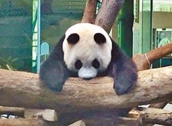 動物園將重開放 加緊趕工