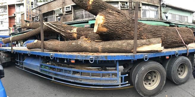 施工廠商今天下午突然擅自移除2株列管的珍貴老樹。(譚宇哲翻攝)