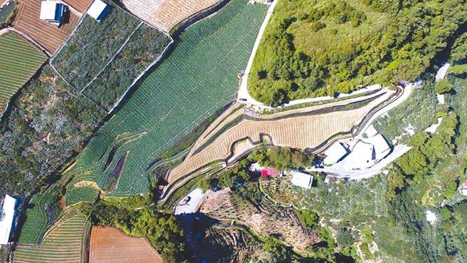 台中市和平梨山地區環山段土地遭濫墾,違規面積近1.5個足球場大,易造成水土流失。(台中市府提供)