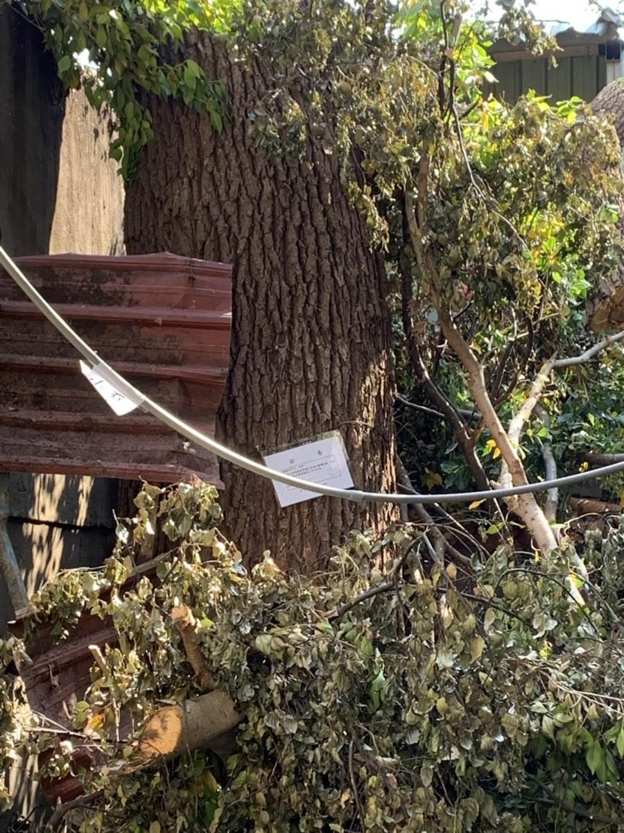景觀處日前將湳雅夜市私人地中的2棵老樹列管。(譚宇哲翻攝)