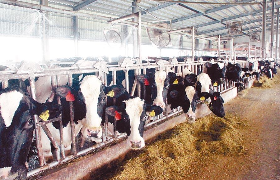 雲林縣新設畜牧場自治條例加嚴,新場的汙染防制門檻高,圖為一家乳牛場。(周麗蘭攝)