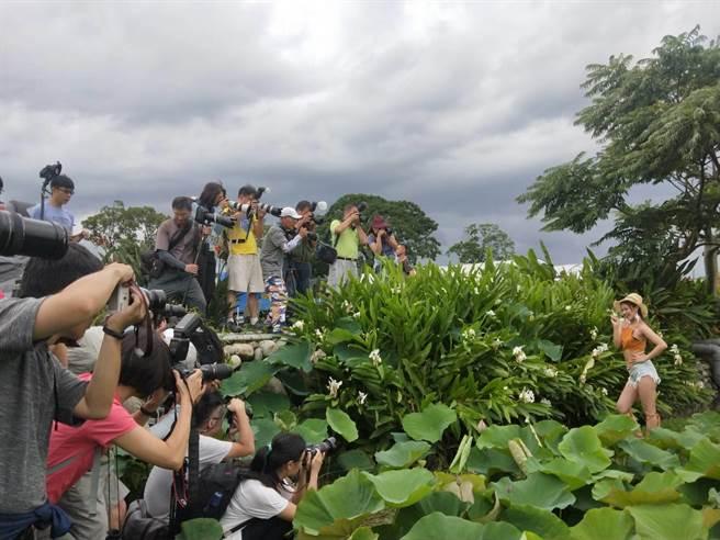全台500位攝影高手齊聚2000多坪的荷花區,爭相捕捉荷花美人優美畫面。(陳淑娥攝)