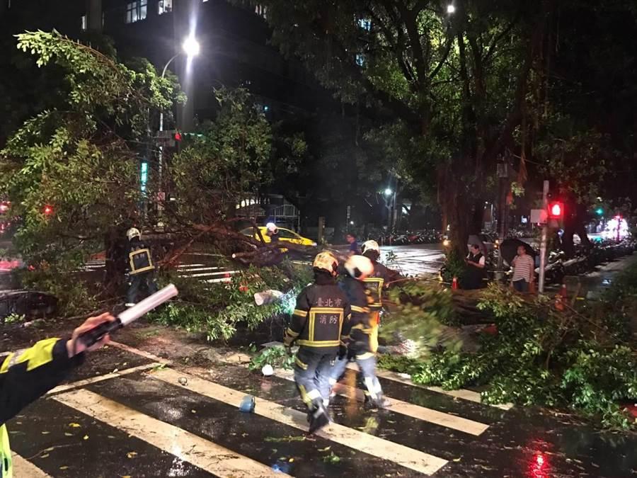 北市青島東路路樹突然倒下,壓傷一名路過機車女騎士。(謝明俊翻攝)
