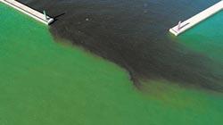 海藻增生 安平港出現陰陽海
