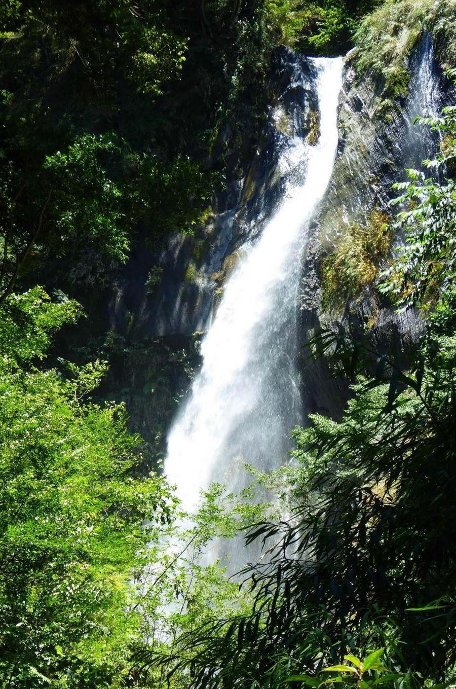 ▲奧萬大森林遊樂區在短暫梅雨過後,瀑布宛如萬馬奔騰、水勢壯闊。(南投林管處提供)