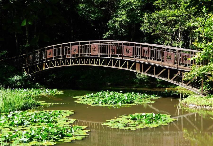 ▲奧萬大國家森林遊樂區的生態池及楓葉橋景觀。(南投林管處提供)