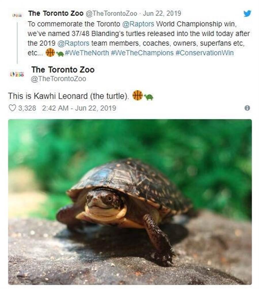 多倫多動物園用暴龍球員為瀕危布氏擬龜命名。(摘自多倫多動物園推特)