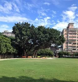 樹林藝文綜合大樓內部照曝光  榕樹楓香環繞打造「老樹樂園」