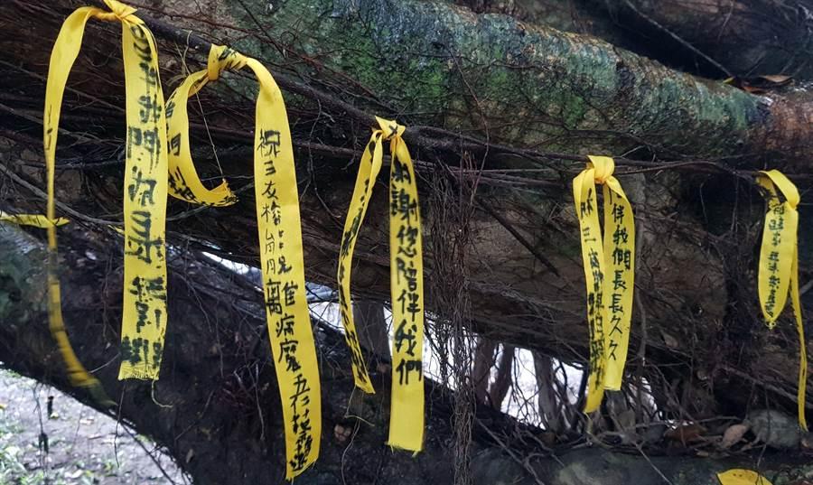 感谢老树陪伴,里港国小学生为老树系上祈福的黄丝带。