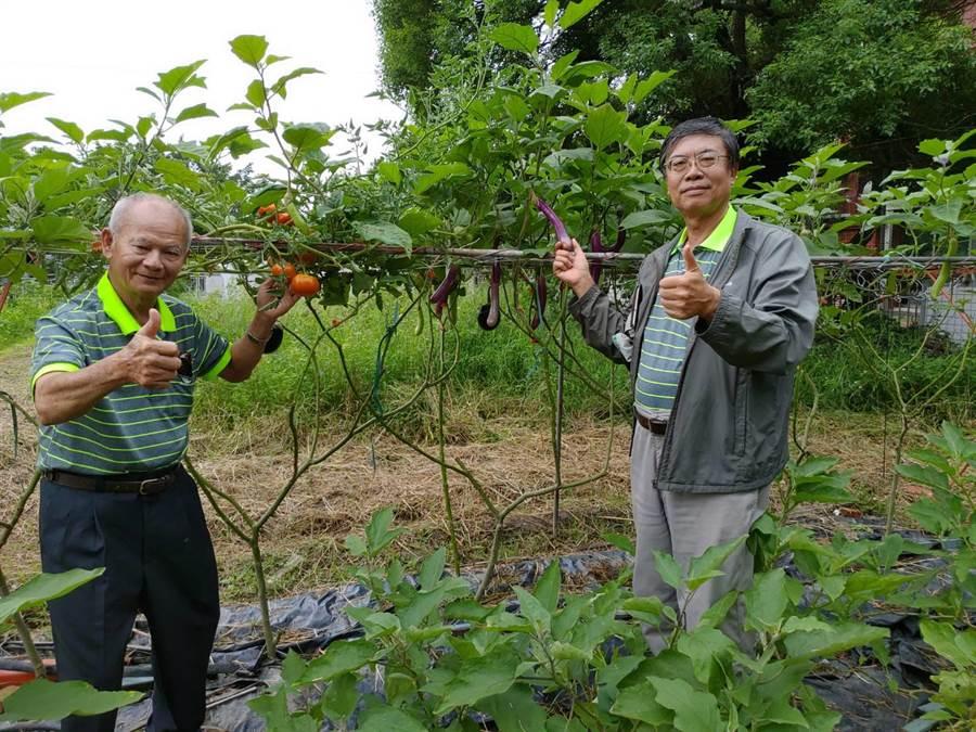 年近80的老學員黃福星(左),從事農業數10年,利用原生種的「刺茄 」作砧木,嫁接同是茄科植物的番茄和茄子,讓一棵茄子樹上結出番茄、圓茄、長茄,右為老師胡安慶。(張亦惠攝)