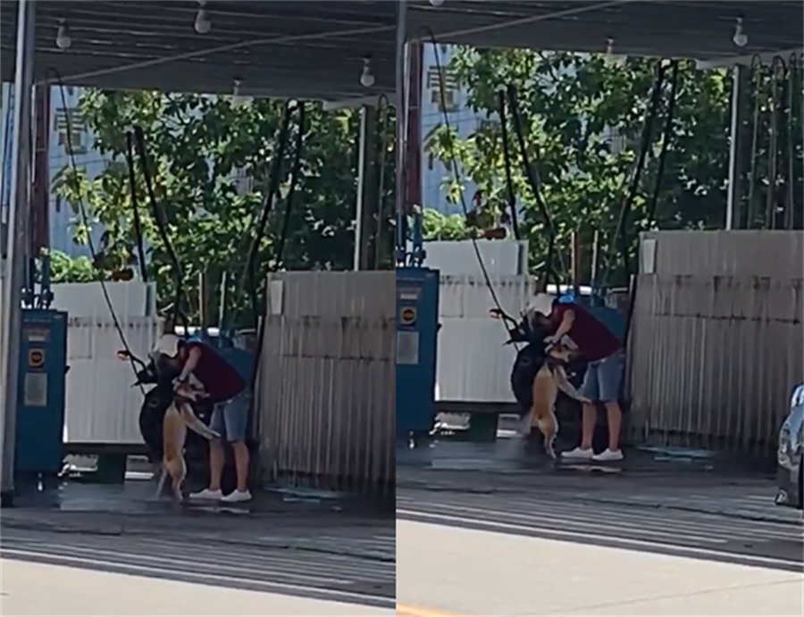 他拿「高壓水槍」幫狗洗澡 慘叫聲讓網友崩潰。(翻攝自爆廢公社公開版)