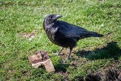 街頭驚見謎之鳥!雙拳撐地超霸氣