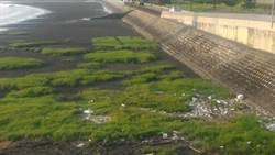 高美濕地美景變調 爆垃圾堆3個月無解