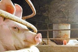檢疫造假 陸禁止進口加國肉品