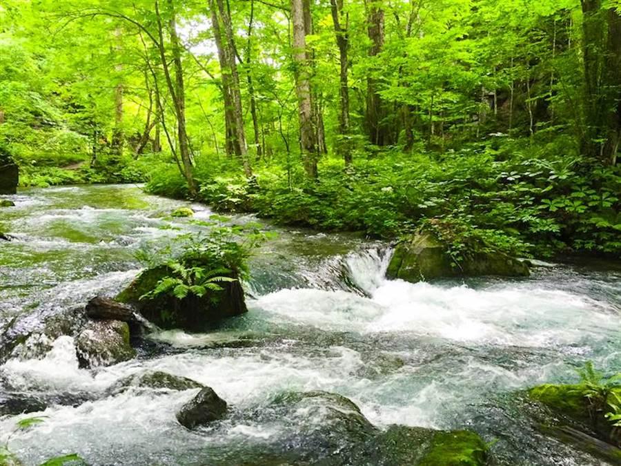 夏季的奧入瀨溪是日本知名的避暑勝地。(雄獅旅遊提供)