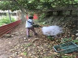 消滅病媒蚊防疫  頭份7月起全市噴藥