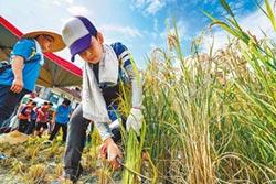 深耕食農教育 宜蘭學童歡喜收割