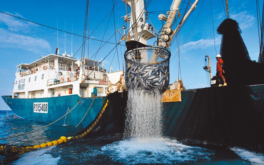 歐盟肯定台灣在遠洋漁業管理的進步,解除IUU黃牌。(綠色和平提供)