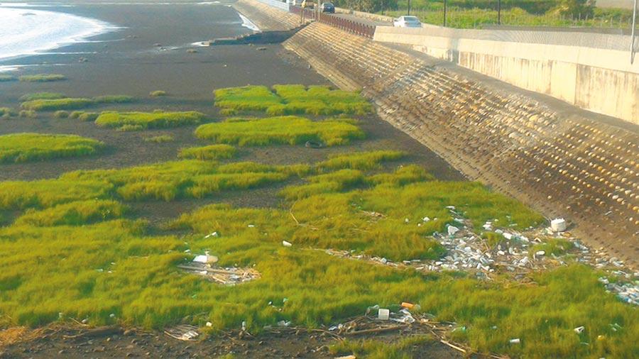 網友指出,這是高美溼地景觀橋底下的垃圾堆,他在市長臉書貼了好幾次,2、3個月了,垃圾堆依然在那裏。(翻攝臉書)