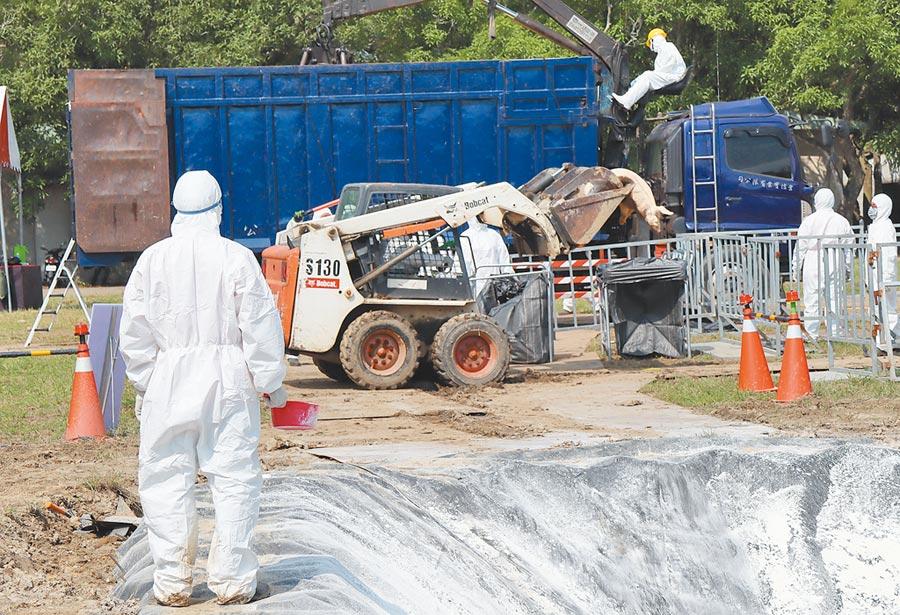 全國非洲豬瘟緊急防疫模擬演習28日下午在台南後壁區舉行,找來真的病死豬演練,過程嚴謹逼真。(劉秀芬攝)