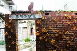 台南巷弄尋彩繪!喜樹和貓捉迷藏、灣裡美味一籮筐