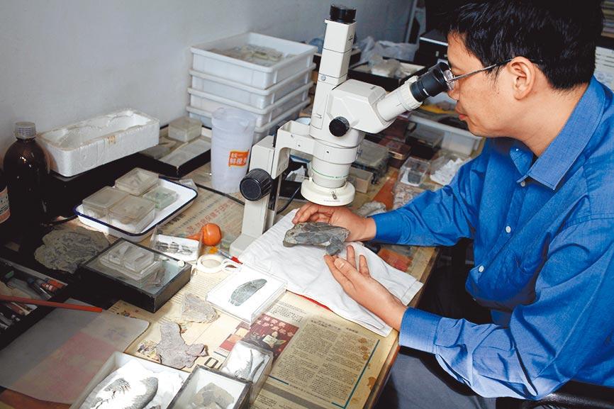 研究員在顯微鏡下觀察古魚化石。(新華社資料照片)