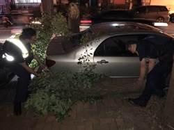 樹倒車毀擋車流 員警揮汗移置