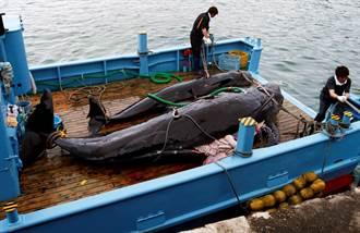 時隔31年 日今重啟商業捕鯨 下半年配額227頭