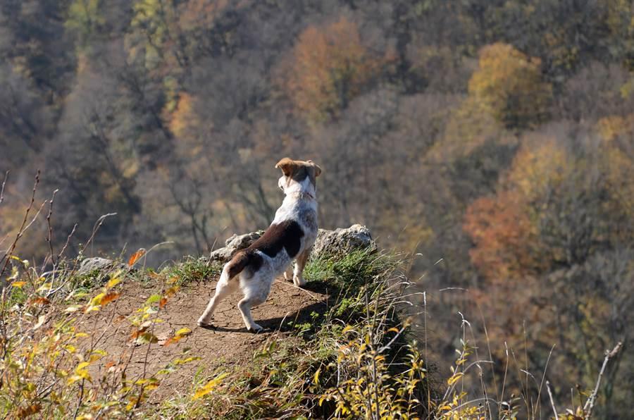 狗墜落懸崖失蹤 45天後奇蹟爬出(示意圖/達志影像)