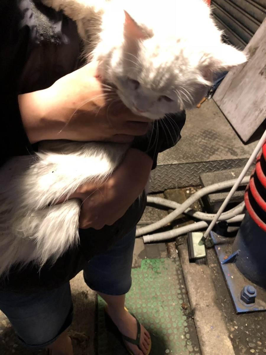 新北市新店警分局碧潭派出所警員協助民眾找回走失的愛貓。(葉書宏翻攝)