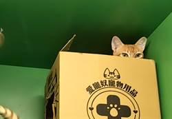 喵喵店員療癒你的心  食物超好吃貓中途寵物餐廳!