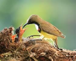 拍到母鳥餵哺畫面 放大一看她心碎