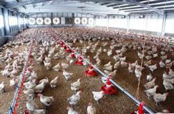 雲林縣畜牧場設置條例新法修正  意見分歧無定論