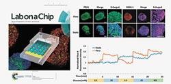 陸晶片智霸全球 仿生器官擬人體