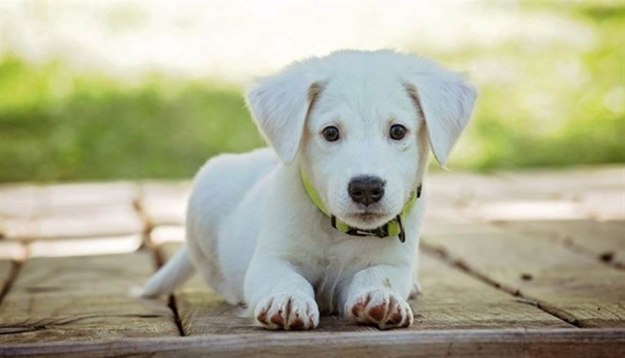 狗狗早就被證實能讓人體產生催產素、血清素等「快樂激素」。圖/pixabay