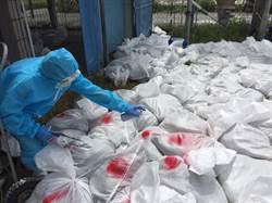 禽流感病毒剎不住 大城鄉再撲殺1萬5189隻土雞