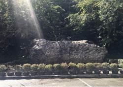 千年牛樟漂流木 9日隆重回到那瑪夏