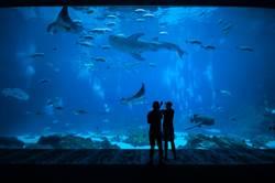 水族館展「美男魚」 網嗨求時間表