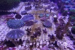 「海中熱帶雨林」等你來保護!珊瑚小學堂暑假開課