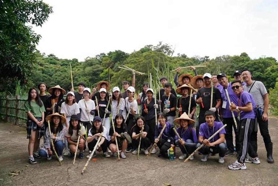 大專生於新竹新城風糖休閒園區體驗甘蔗採收。(廖志晃翻攝)